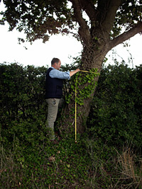 Development site tree surveys from MJC Tree Services