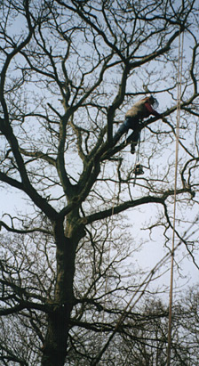 Tree work specification from MJC Tree Services